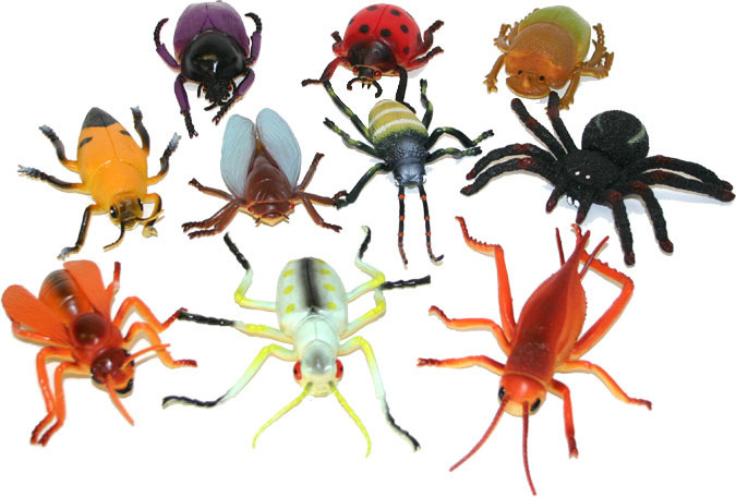 hmyz 10 cm